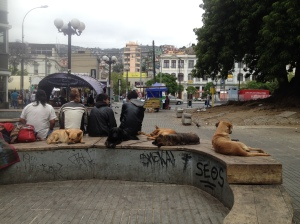 it's sad but there's many dogs on the streets in the cities of chile